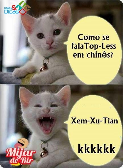 Fotos de piadas de gatinho para Facebook