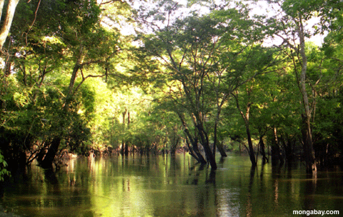 Amazon flooded tropical forest
