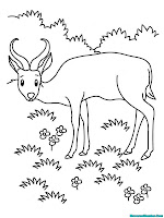Mewarnai Gambar Antelop