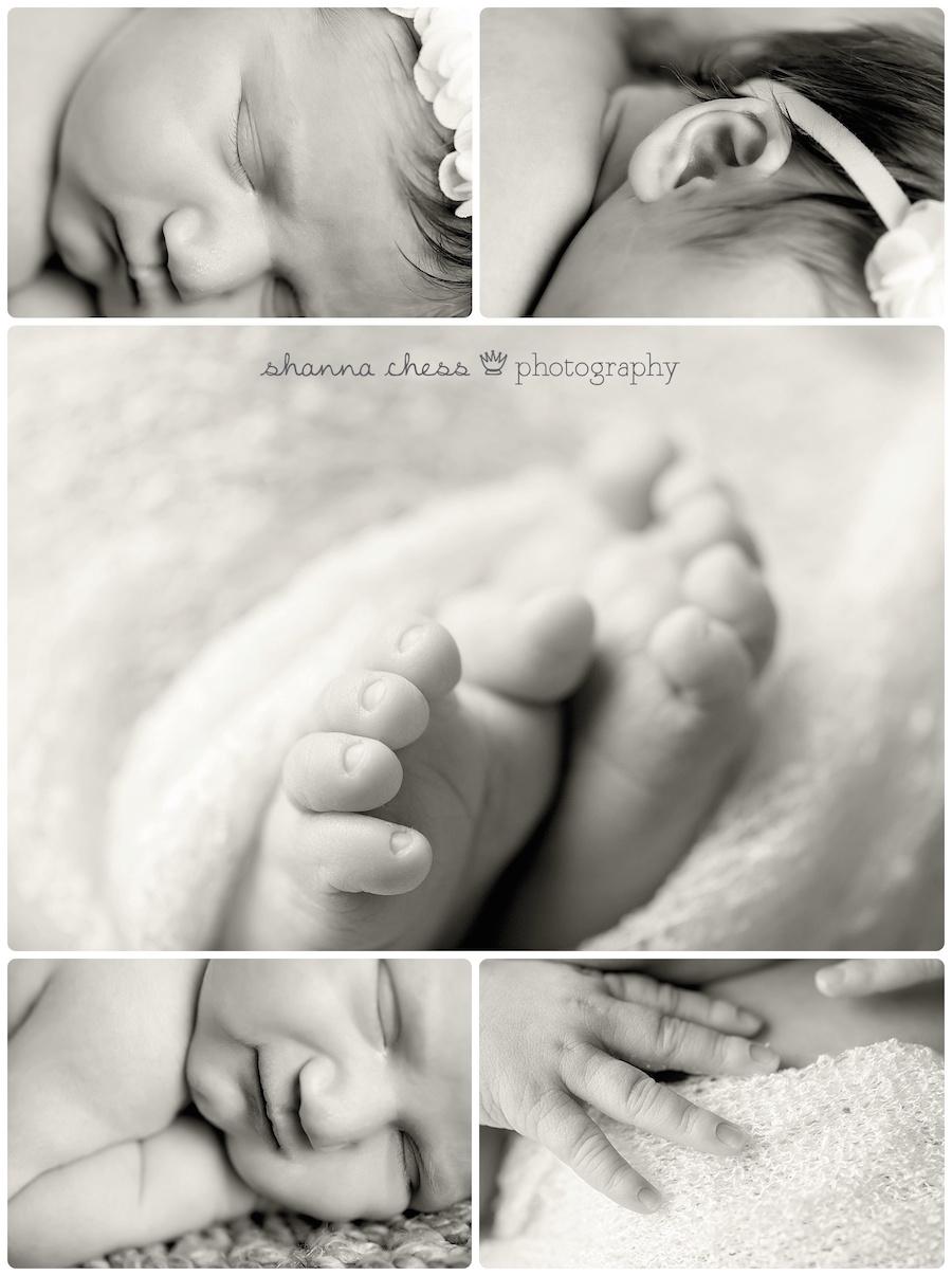 eugene springfield oregon newborn photography macro