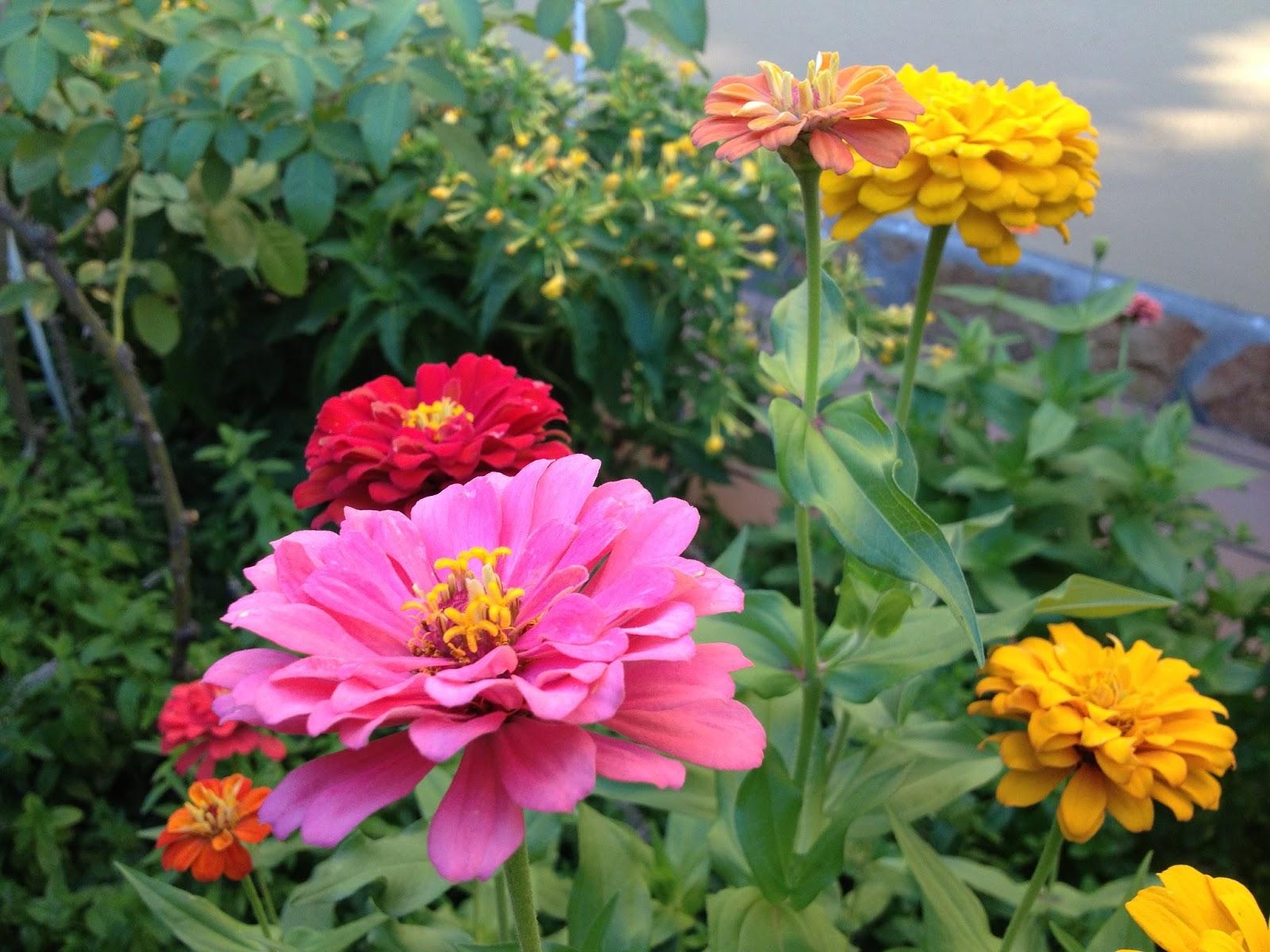 Flores Bonitas Para Jardin - Flores-bonitas-para-jardin