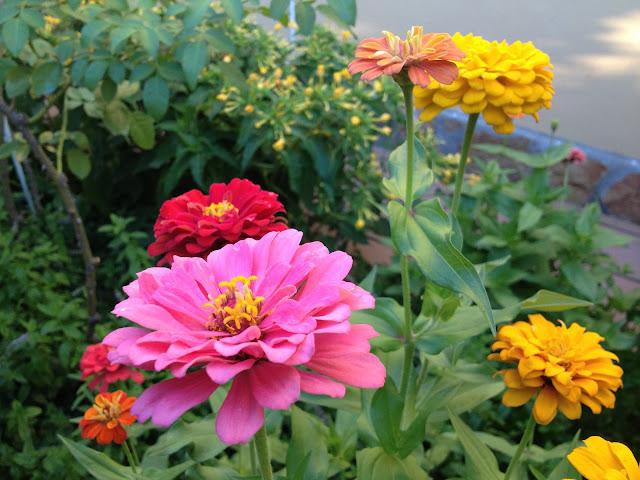 Arte y jardiner a flores y plantas de arte y jardiner a for Flores de jardin exterior