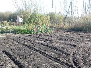 Как посадить траву на даче.