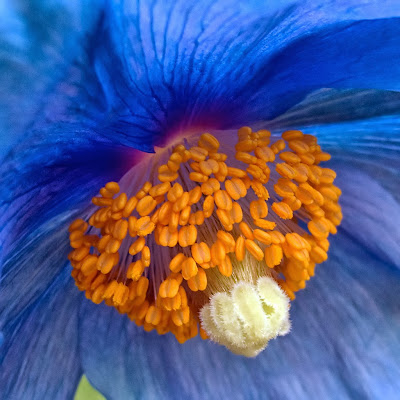 amazing pictures of flowers