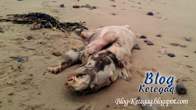 Makhluk misteri terdampar di tepi pantai