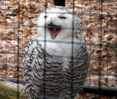 http://4.bp.blogspot.com/-YOvknw4k0tQ/TZMClwHoitI/AAAAAAAAAs0/wYc5ssjkucE/s1600/Happy-Smiling-Animals-004.jpg