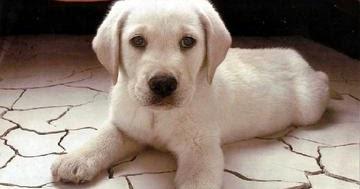 Descrizione di un cane oggettiva - Colorazione immagine di un cane ...