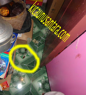 anti kecoa, obat anti kecoak, info obat anti kecoak
