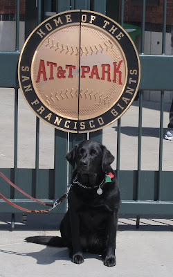 black Lab near AT&T Park signage that reads: Home of the San Francisco Giants