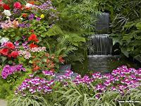 Plantas de jardines con rosas en un pequeño estanque con cascada