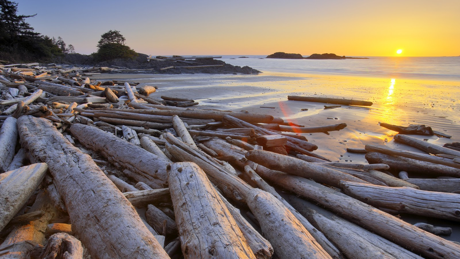 Marcia gay harden driftwood pacific rim national park for Home wallpaper vancouver