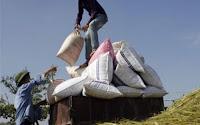 Nông nghiệp là lĩnh vực tại Việt Nam ít chịu ảnh hưởng từ khủng hoảng kinh tế thế giới - Ảnh: Reuters