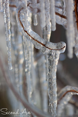blog hop, macro photography, macro, nature, photo challenge, photoblog, Photographer, Photography, project 52, still life photography, still life photographer, Virginia photographer, snow, icicles, low light,