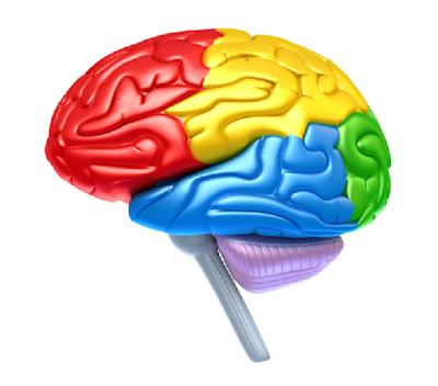 10 Makanan Yang Mencerdaskan Otak