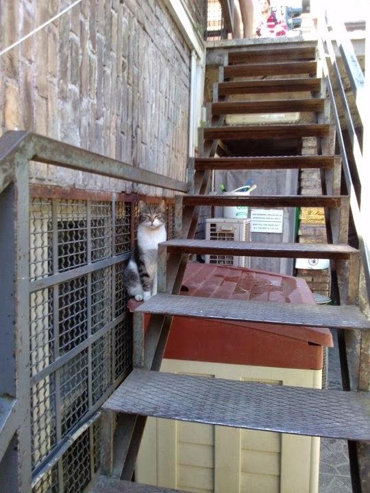 Cat of Torre Argentina