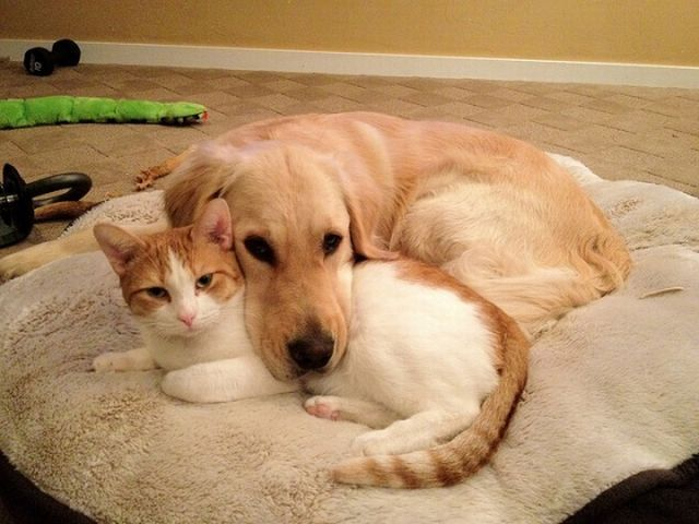 Cute Dogs And Cats Together