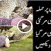 Lion Attacks On Girl and Killed Her