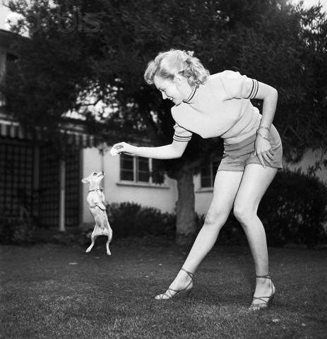 Marilyn Monroe Chihuahua