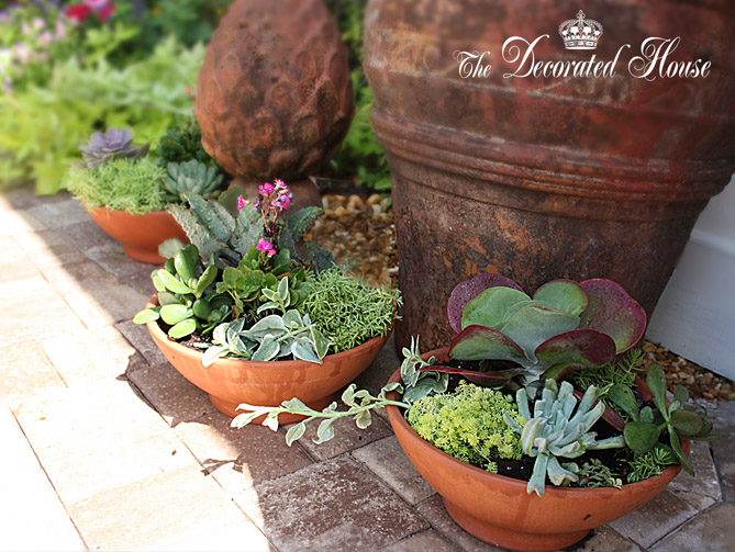 The Decorated House How to Create a Succulent Dish Garden