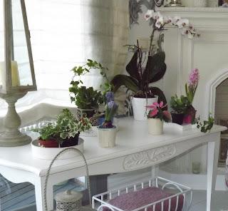 Algunas de mis plantas de orquideas for Plantas salon decoracion