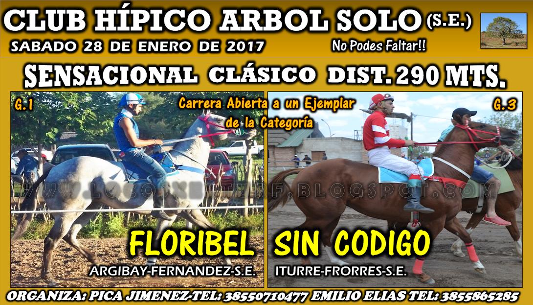 28-01-17-HIP. ARBOL SOLO