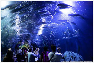 Largest Aquarium in Europe
