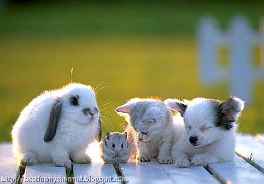 Four small furry animals