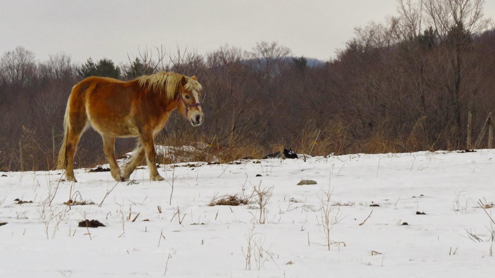 Pretty-Horse-in-Manchester-Vermont