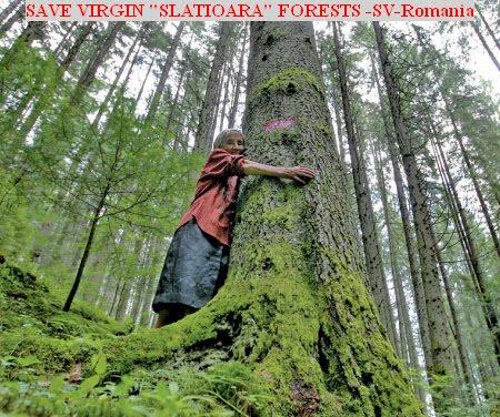 WWF - SLATIOARA - ROMANIA
