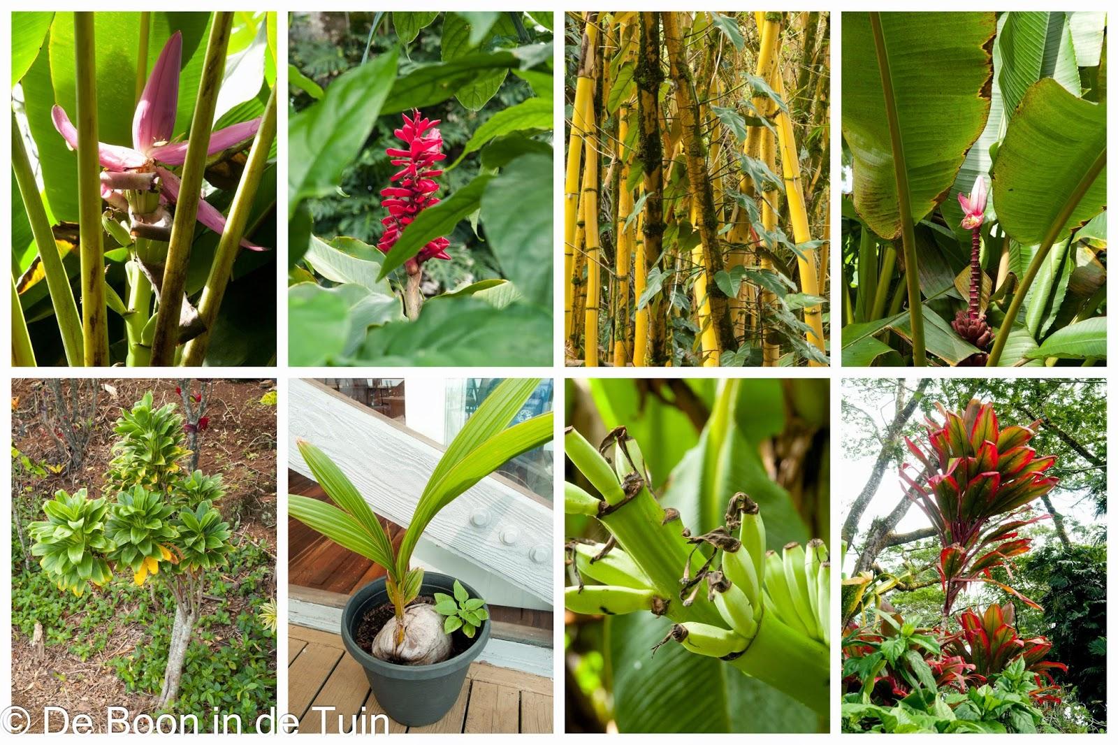 flora fauna hawaii