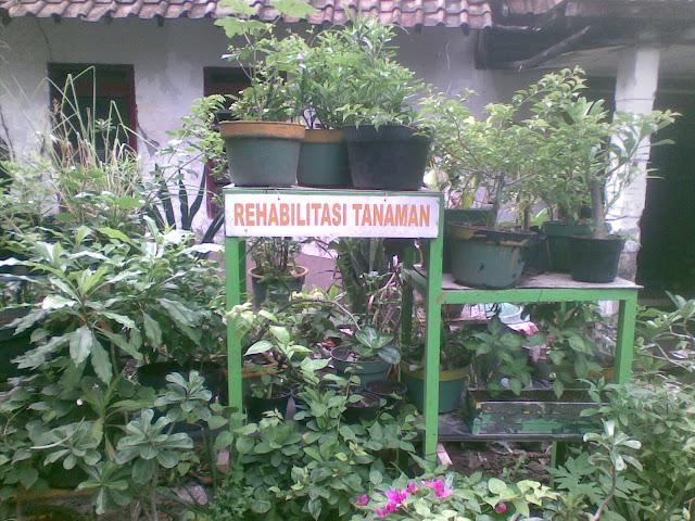 Kampung Wisata Jambangan Surabaya Jawa Timur 4