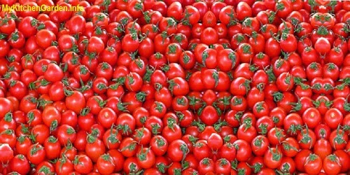 Tomatoes are a rich source of antioxidants including lycopene.