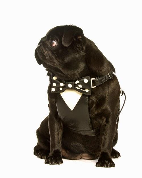 Tuxedo harness