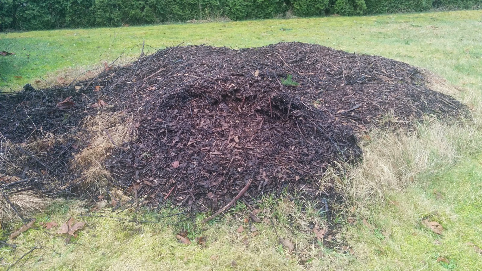 A pile of wood chips and small sticks that will make excellent garden bed cores.