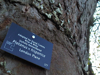 Compton+Verney+tree+adoption-Plane+tree