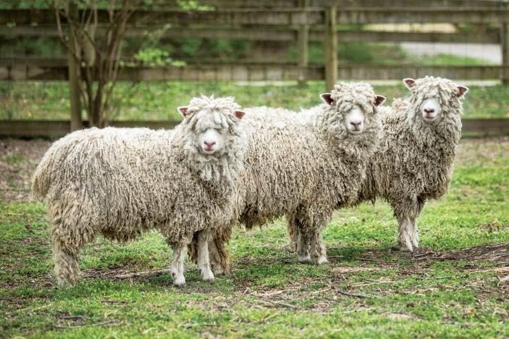 proses pembuatan wol
