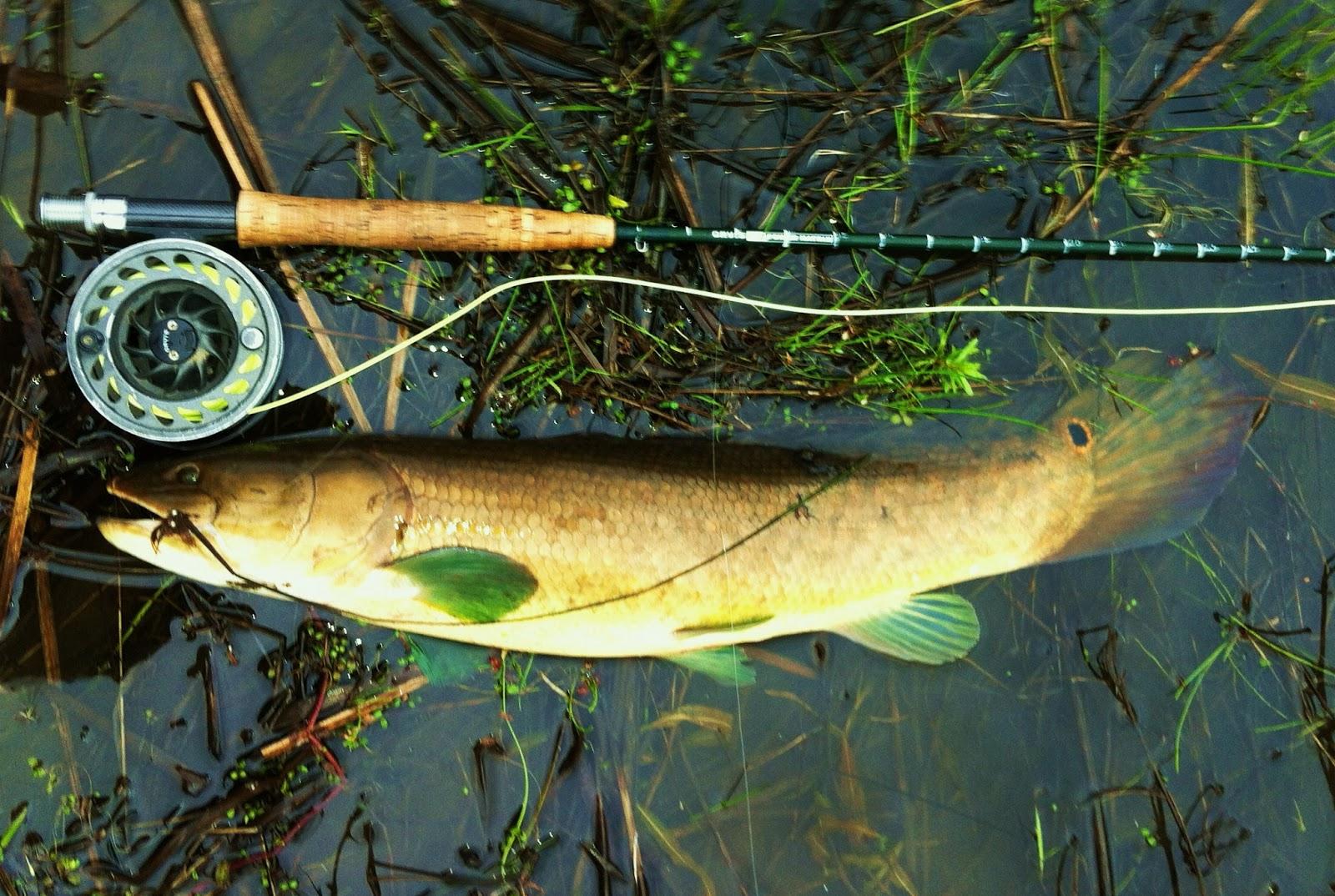 Drew Price Fly Fishing: Spawning Bowfin