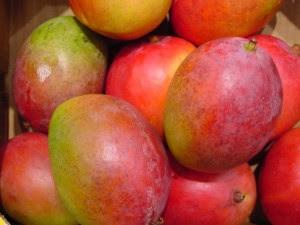 Mango africano caçados para emagrecer