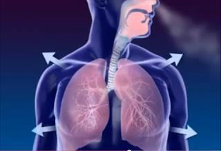 http://4.bp.blogspot.com/-YTB7JGTEPOU/T146Wjx4JeI/AAAAAAAACsU/nWwnTREWEYE/s1600/V%C3%ADdeo-sobre-respira%C3%A7%C3%A3o.png