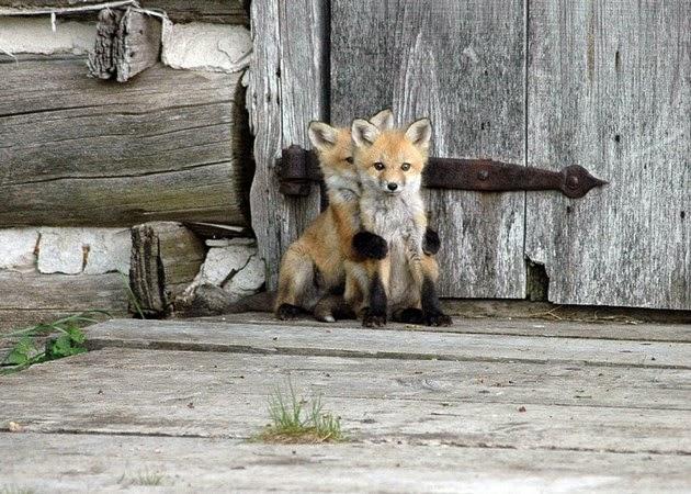 fox photo gallery
