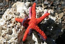 Seed Bead Starfish
