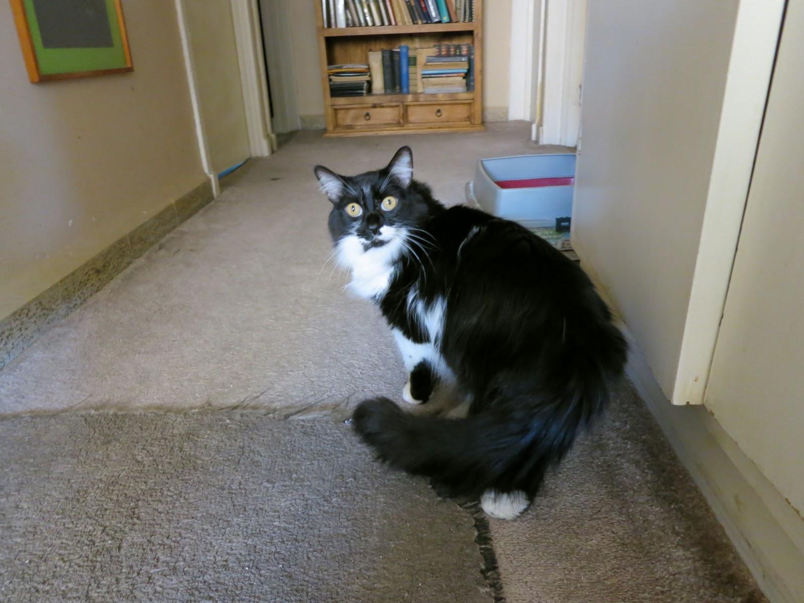 comunicacion del gato
