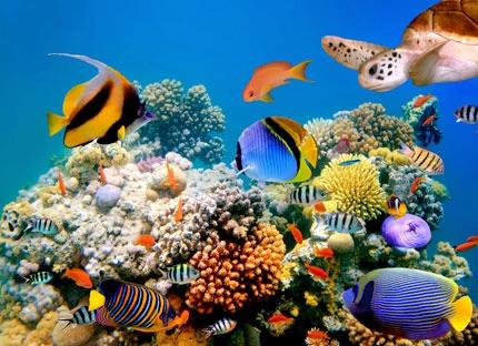 Fish Aquarium - Fishes