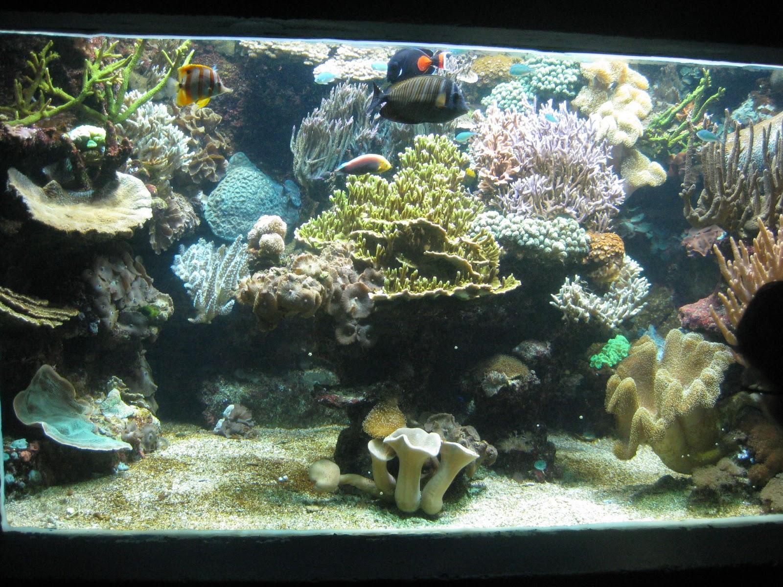 classe de cm1 cm2 mercredi aquarium du cap d agde et p 234 che 224 pied