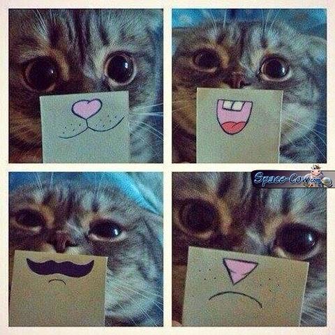 funny cute cat pics