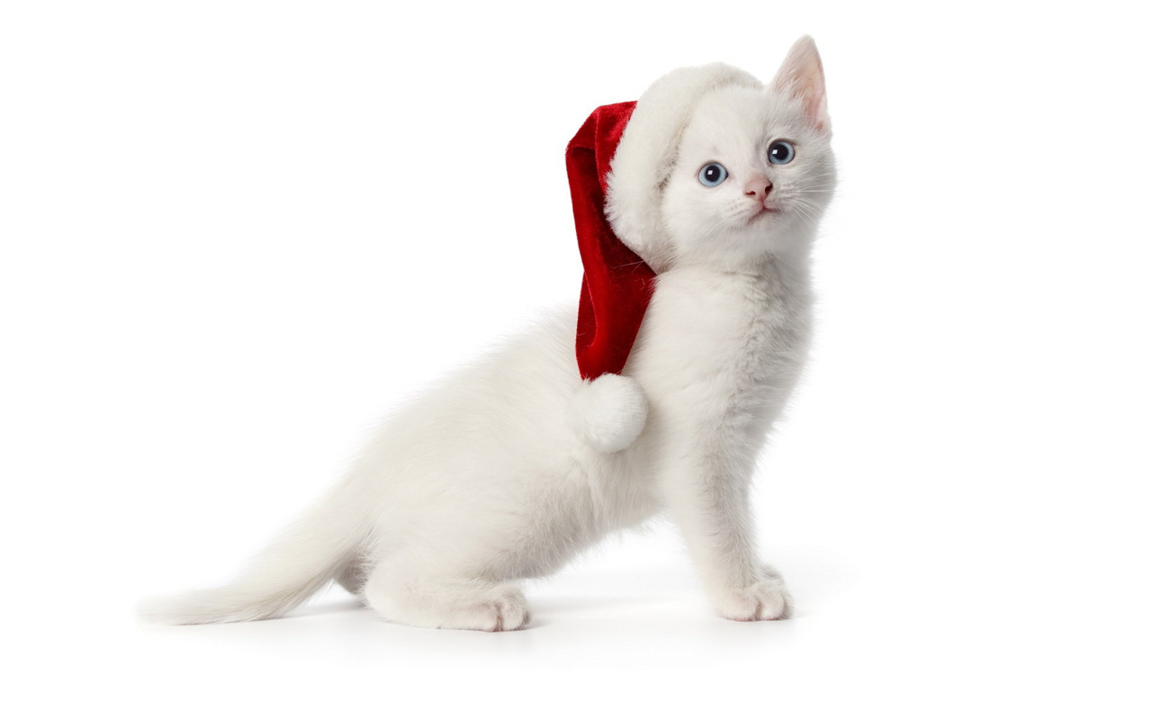 free download christmas pets hd wallpapers in 1280x800 - mobile