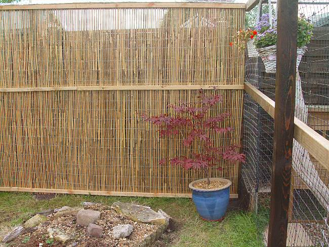 Bamboo Screen at the back of the Cat Run