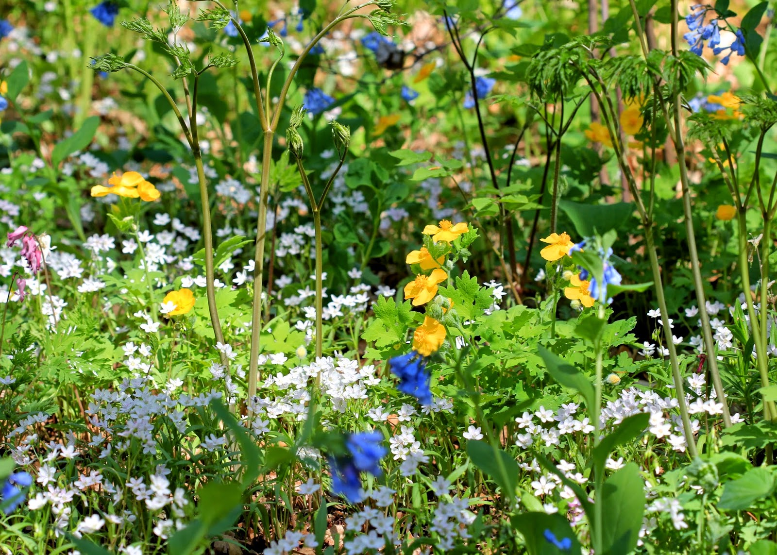 a sunny spot filled with wildflowers - Wildflower Garden