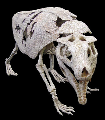 esqueleto de Armadillosuchus