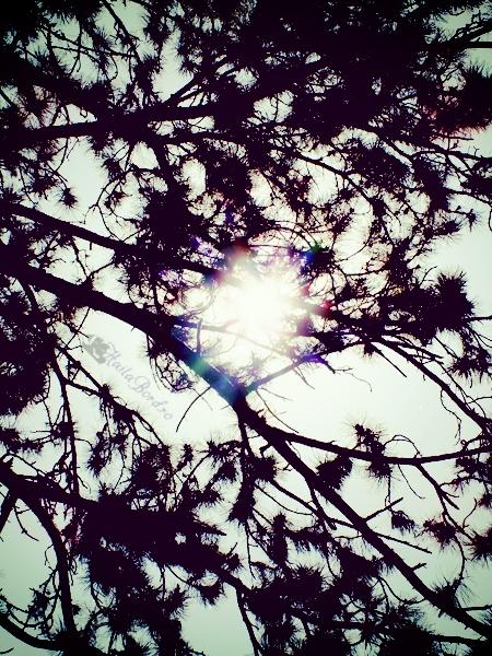 soare printre copaci gradina botanica bucuresti